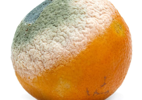 common mold on food