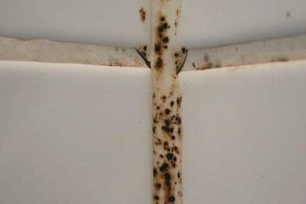 how to get rid of mold in bathroom