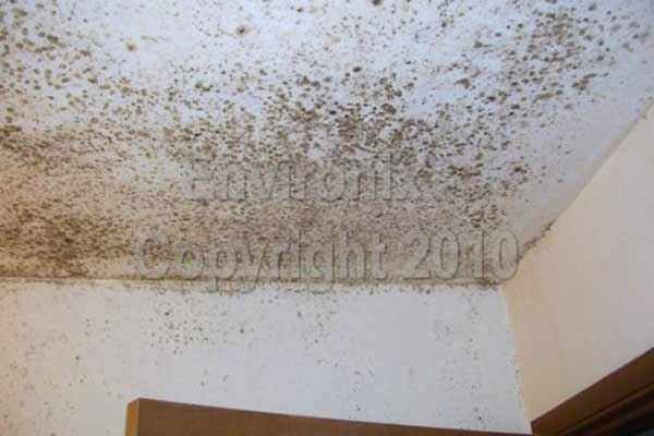 How To Get Rid Of Mold On Bathroom Ceiling Orange Mold