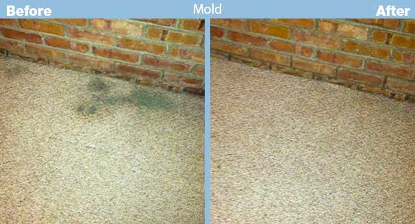 how to kill mold in carpet