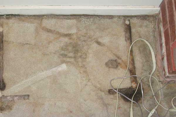 how to remove mold from carpet