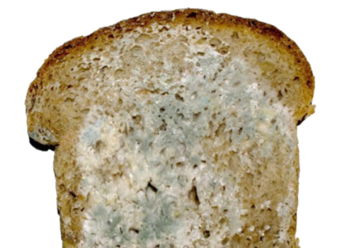 is-mold-on-food-dangerous-to-eat