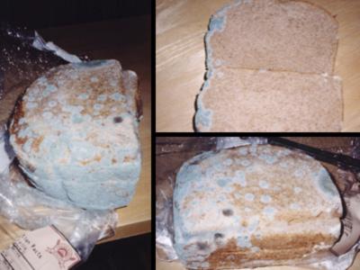 mold allergy food intolerance