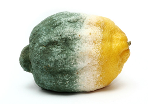 mold allergy food sensitivities