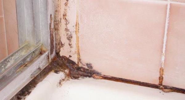 mold bathroom walls