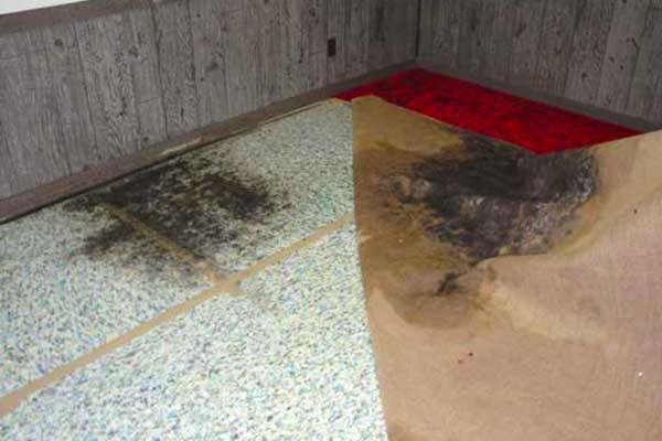 mold carpet cleaner