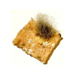mold food allergy