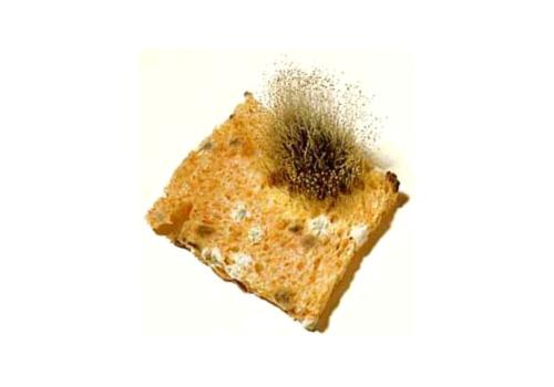 mold food allergy