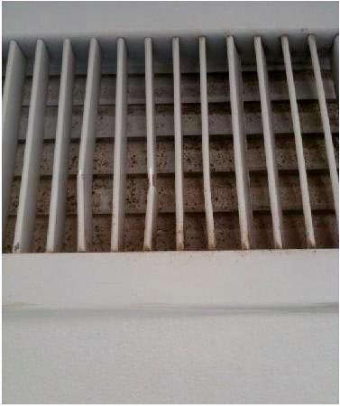 mold in air conditioner