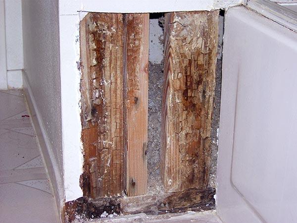 mold in bathroom walls