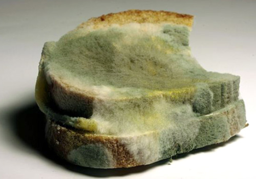 mold on bread and pregnancy