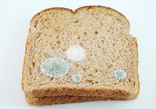 mold on bread bad for you