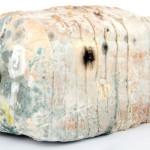 mold on bread penicillin