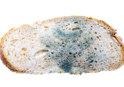 mold on bread science experiment
