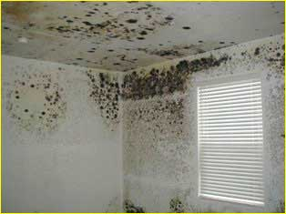 mold on ceiling removal