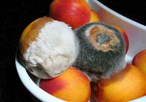 mold on food health effects