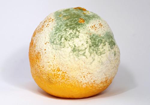 mold on foods info