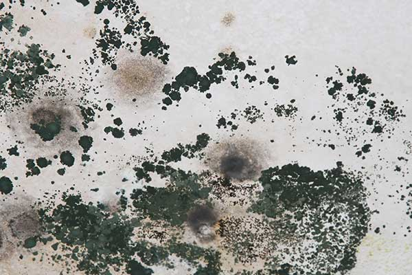mold on walls dangerous