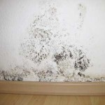 mold on walls in bedroom