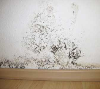 mold on walls in bedroom