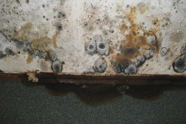 mold on walls in garage