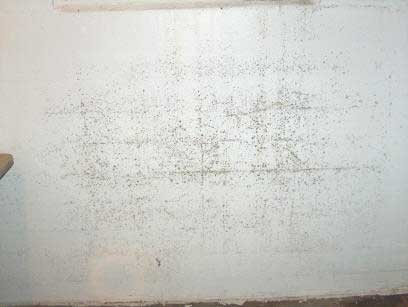 mold on walls in winter