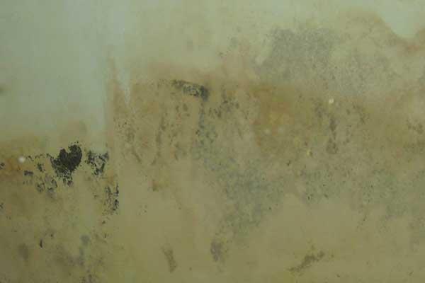 mold on walls vinegar