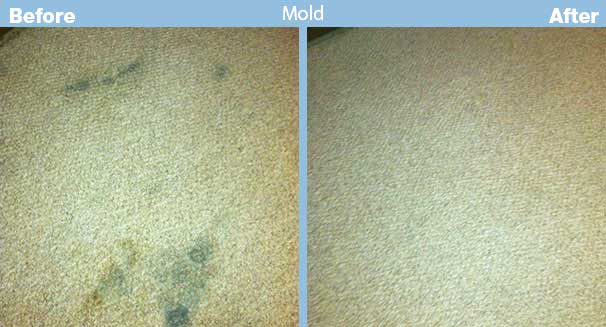 mold remediation cost