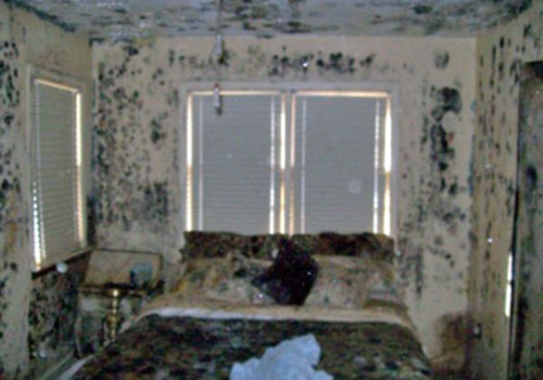 mold remediation courses canada