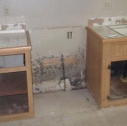 mold remediation health canada