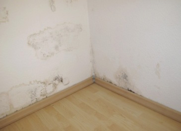 mold removal calgary ab