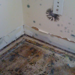 mold removal calgary reviews