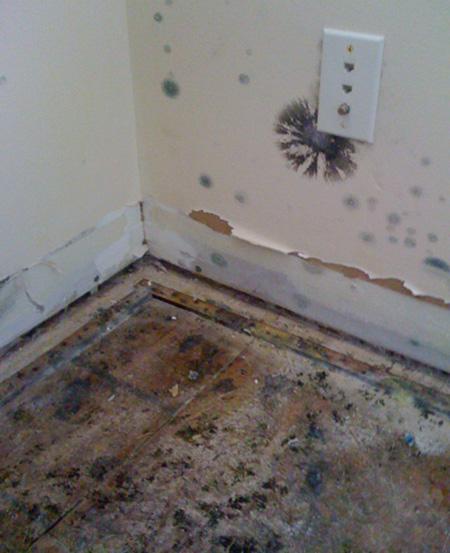 mold removal calgary reviews
