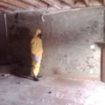 mold removal cost calgary