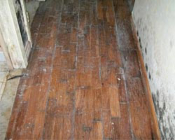 mold removal furniture fabric