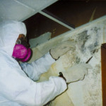 mold removal in calgary