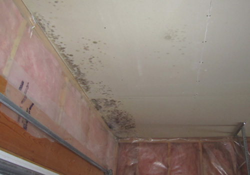 mold removal ontario canada