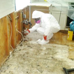 mold removal products canada