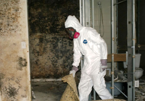 mold removal toronto cost