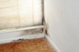 mold removal toronto ontario