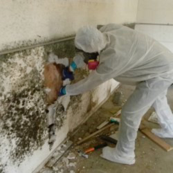 mold removal training canada