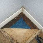 mold resistant carpet