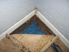 mold resistant carpet