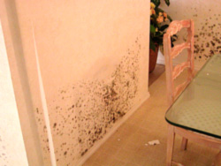 mold resistant furniture