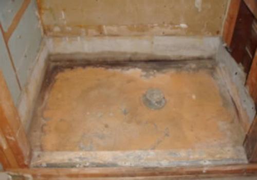 orange fuzzy mold in bathroom