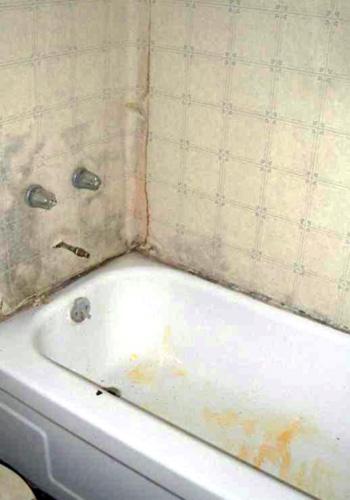 orange mold in bathroom ceiling
