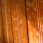 orange mold in my house
