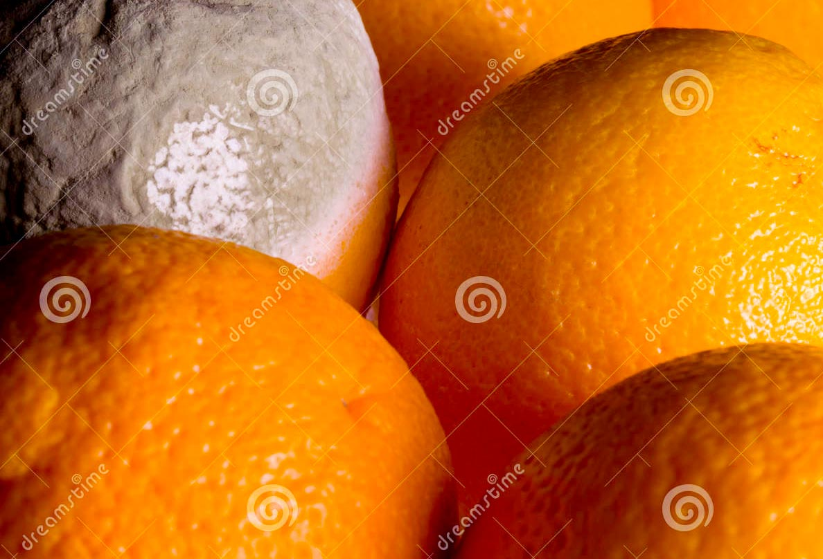 orange powdery drug