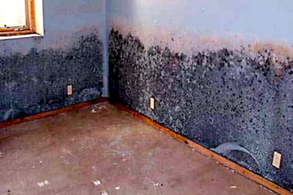 pictures of black mold in air ducts