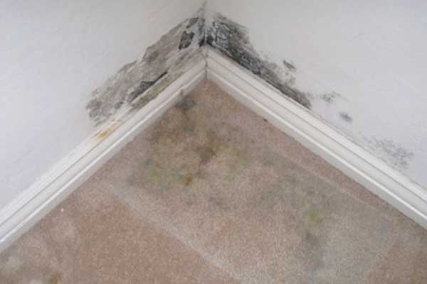 remove mold from carpet